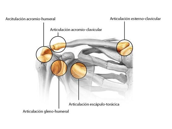 Manguito Rotador Huesos